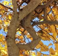 S tree fall